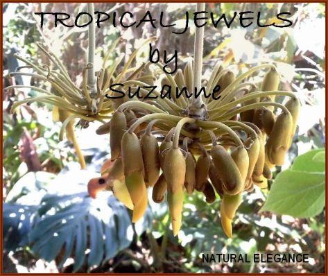 TropicalJewelsLogo