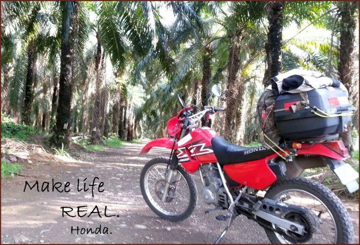 palmfarm_MakingItReal_Honda.jpg